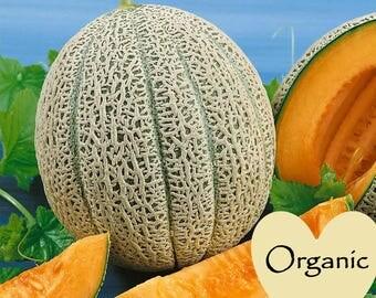 Melon Cantaloupe Hales Best Jumbo Organic Non-GMO, 30+ Organic seeds, Melon, Organic garden Seeds, Vegetable Seeds, Organic gardening seeds