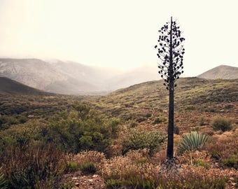 Sentinel - Landscape Photography - CA