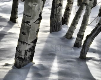 Faerie Forest - PHOTO PRINT - Trees in Winter Snow