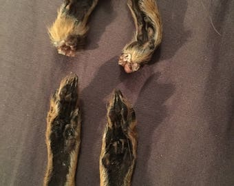 Mummified squirrel feet