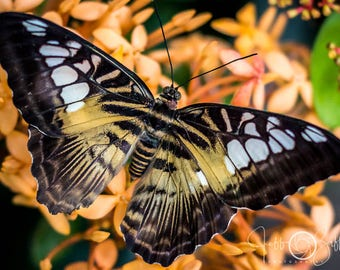 Yellow butterfly, orange flower, nature photography, lanscape art