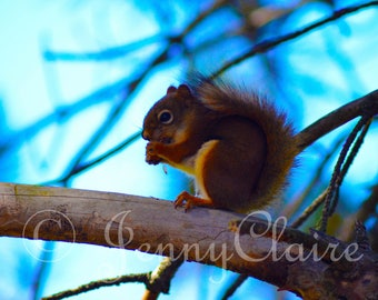 Red Squirrel digital download of photograph