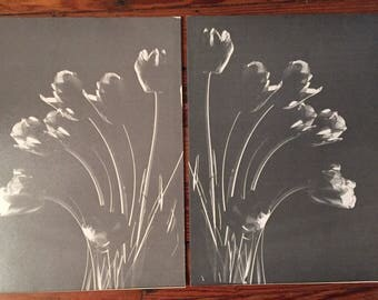 Vintage  Mod Eames Era 50s Set of Two Tulip Photographs Black and White