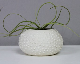 Handmade Porcelain Urchin - Sweet Pea in Grey Small - Rustic Porcelain Orb Vase - Round Ceramic Pot with Dots - Air Plant Holder