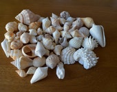 Mixed Lot of Sea Shells for Crafts, Nautical, Wedding, Garden, and Home Decor