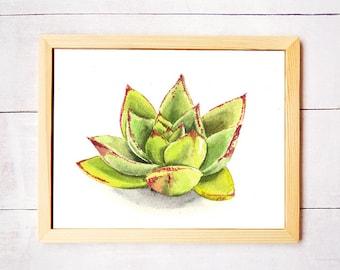 Succulent Watercolor Art Print - Digital Download
