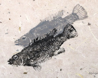 ORIGINAL Salt Water real Cunner GYOTAKU Beach House fishing Art ( Fish Rubbing ) on hand made Paper