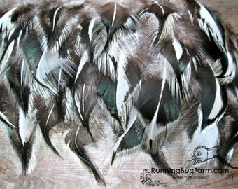 "Cruelty Free Natural Black White Real Bird Feathers Loose Shoulder Back Silver Laced Cochin Rooster Feathers For Crafts 25 @ 3 - 3.5"" / SLC9"