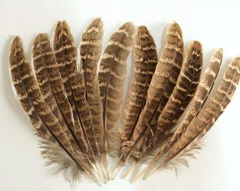 Pheasant feathers - 4 to 6 inch long - medium small feathers - brown white bands - for millinery crafts regalia etc - coyoterainbow 4xx4