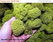 7days Chartreuse Reindeer moss 2 oz bag-Deer foot moss-Fluffy Lichens-Preserved Lichens-Spring Green Colors in assorted sized spon...