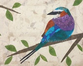 Bird Art Fine Art Giclee Print Lilac Breasted Roller Collage