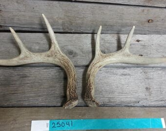 Small Matched Pair of Whitetail Deer Shed Antlers Lot No. 25041TURQ