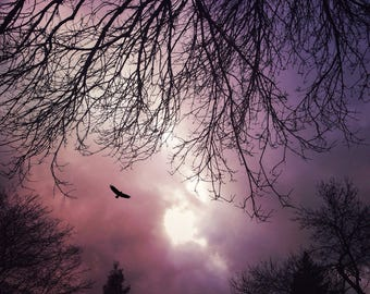 dramatic sky photo, fine art decor bird flying photograph, nature purple pink landscape, surreal dreamy home spirit animal spiritual sunset