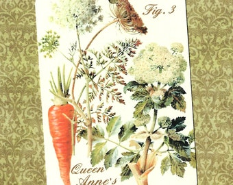 Tags, Queen Anne's Lace, Floral Tags, Botanicals, Gift Tags, Party Favors