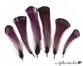 Pheasant Feathers - Natural Lady Amherst Pheasant Tippet Feathers - Plum Purple (12pcs)