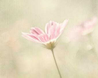 Pink Cosmos Flower, Nature Photography, Botanical Wall Art Print, blush, creme, sage green, art for girls room, nursery, feminine home