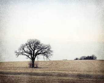 Tree Photo, Landscape Photography, Tree Art, Fine Art Photography, Photo of Tree, Country Farmhouse Decor Rustic Home Decor Large Canvas Art