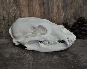 American Black Bear Skull - Beautiful Hand Made Skull Replica