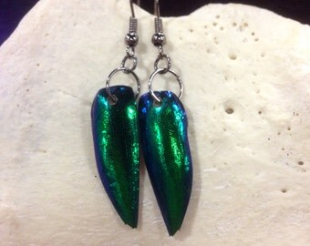 Jewel Beetle Wing Earrings, Taxidermy, Oddity, Elytra