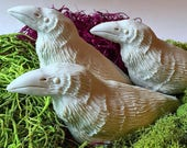 PYO Ravens