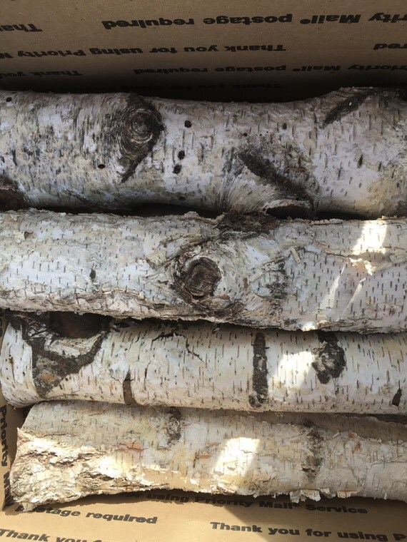 Set Of 12 White Birch Logs 12 Long And 1 1 2 To 2