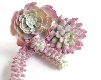 Succulent, pink succulents, trio, succulent collection, succulent favors, succulent gift, wedding succulents, succulent bouquet