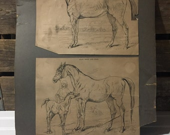 Vintage Horse Print Book  Picture
