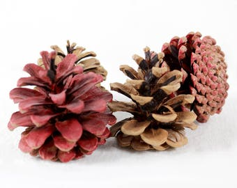 Autumn Pine Cones, Seasonal Pinecones, Fall Home Decor, Door Wreath Supplies, Rustic Craft Supply, Cottage Decor, Thanksgiving Decoration