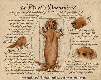 daVinci's Dachsund Vitruvian Man Parody Art Poster/Print of Longhaired Wiener Dog