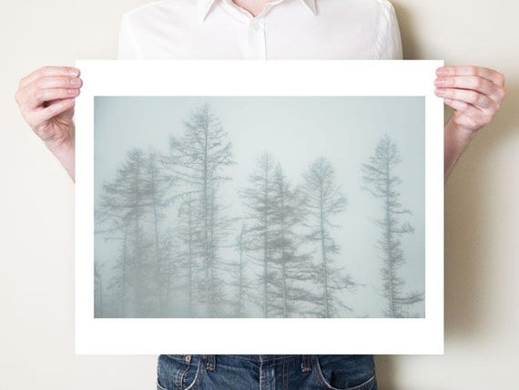 Forest photography, winter landscape woodland photograph. Misty larch trees, England. Monochromatic forest print. Small or extra large art