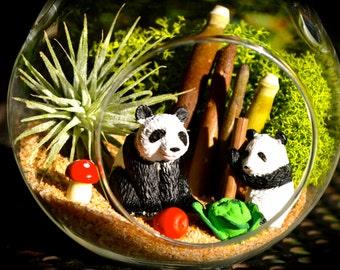Panda Terrarium Kit ~ Small Glass Hanging Terrarium with Air Plant ~ 2 Panda Bears ~ Air Plant Terrarium ~ Panda Bear ~ Gift ~ Birthday Gift