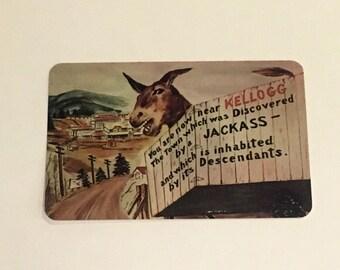 Unused 1950s Kellogg Idaho Postcard Jackass Reference
