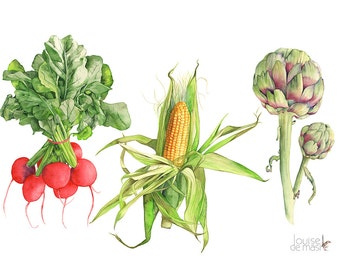 Vegetable print, vegetable watercolour painting print, 5 by 7 size, VT16016, radishes print, ear of corn print, artichoke print, kitchen art