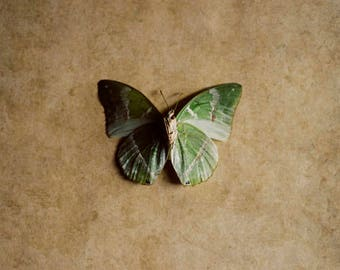 butterfly art print, insect art print, butterfly photograph, green and beige decor, butterfly nursery decor, earth tones,beige nursery decor