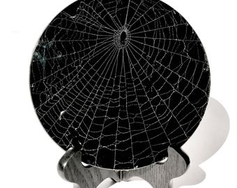 """Real Spider Web Preserved in 6"""" Beveled Glass"""