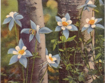 Colorado, Columbines - Linen Postcard - Unused (N)