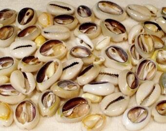 73 Natural Cowrie Seashells