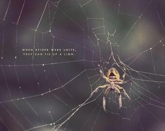 Yellow Spider, Spider Photo, Spider Photography, Spider Art, Spider Print, Spider Lover, Spider Gift, Spider Web Art, Spider Web Photo