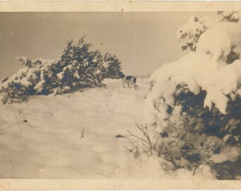 Hunting Dog in Snow vintage original LARGE Landscape old photograph photo ephemera found vernacular pet portrait