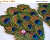 SALE 1 Peacock Feather Pad - Peacock Eye