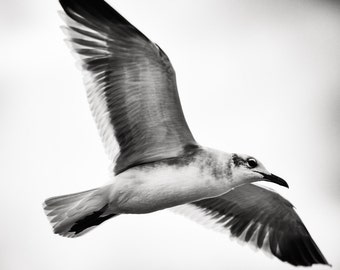 Gull Photo, Bird photography, Seagull, Nature Photo, Black and White - fine art photograph