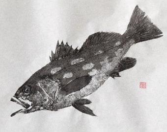 CALICO Kelp BASS Original Gyotaku - traditional Japanese fish art (4)