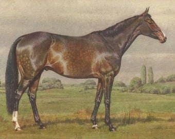Alderson Dappled Bay - Vintage 1940s Artist-signed Horse Postcard