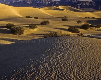 Sunrise Death Valley Layers Sand Dunes Golden Light California Inyo County Travel Photography Original 7x10 signed matted photograph