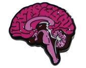 Medial view brain pin