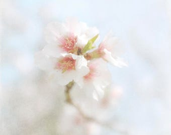 Fine Art Photography Spring Blossoms Dreamy Lensbaby Blur Bokeh White Pink Blue Wall Art Home Decor