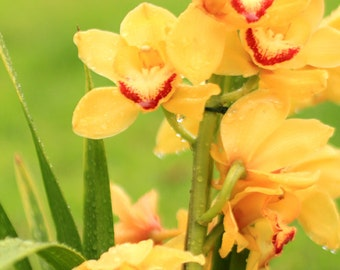 Yellow Orchids Photo Print - Tropical Flower Photography - Fine Art Flower Photo Print - Coastal Style Decor - Size 8x10, 5x7, or 4x6