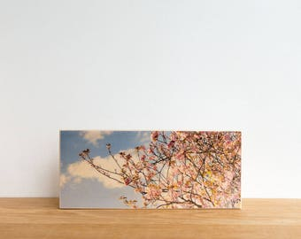 Tree Blossoms Photo Block, 'Paris Blossoms' by  Patrick Lajoie, Art Block, Image Transfer Art, Photography Mini, France, cherry blossoms