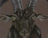 Black Goat Original Drawing