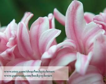 Hyacinth Fine Art Photo Print
